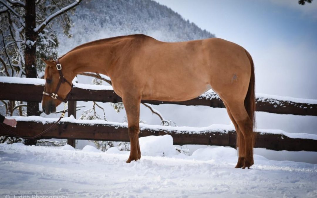 A new home for 2015 AQHA Mare Rooduster