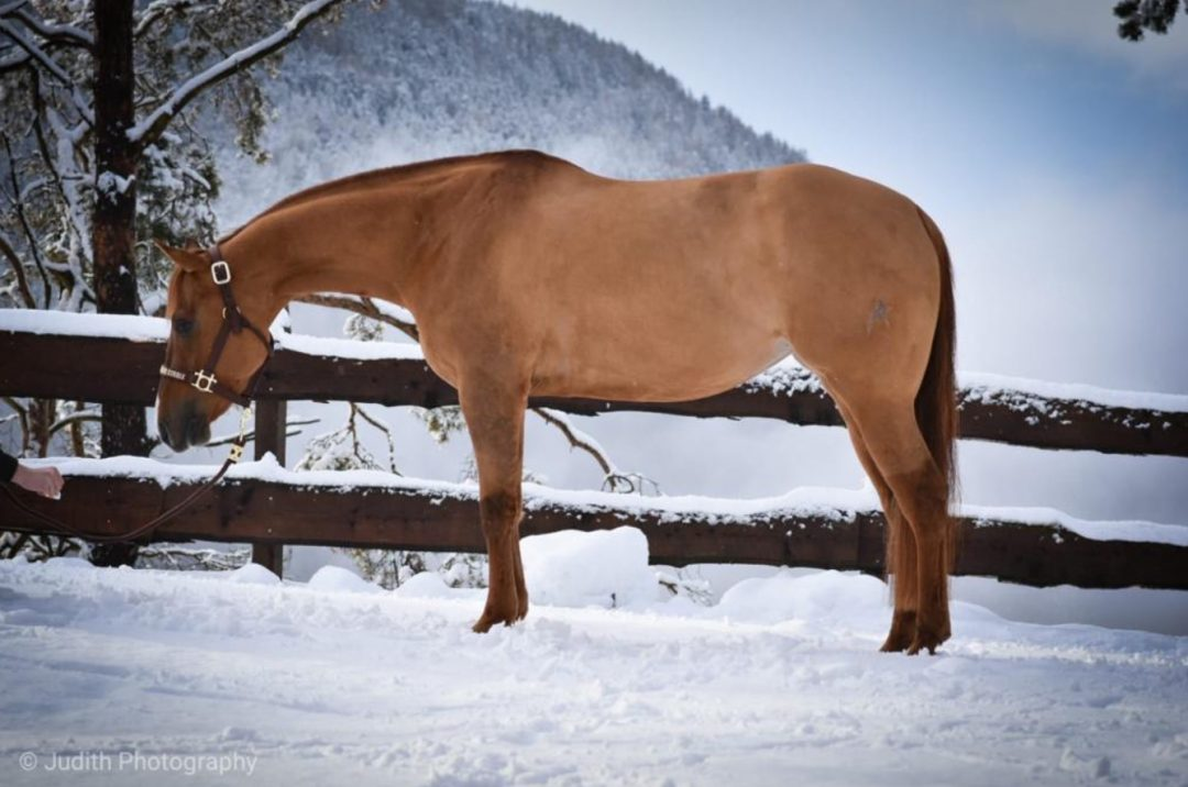 2015 AQHA Mare Rooduster (sold in2020)