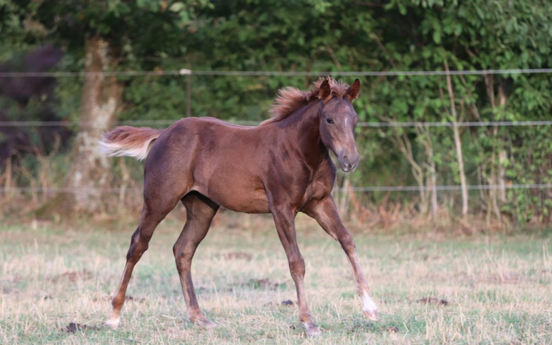 New In! Beautiful 2020 AQHA filly by 3 Times Open Worldchampion What AWave