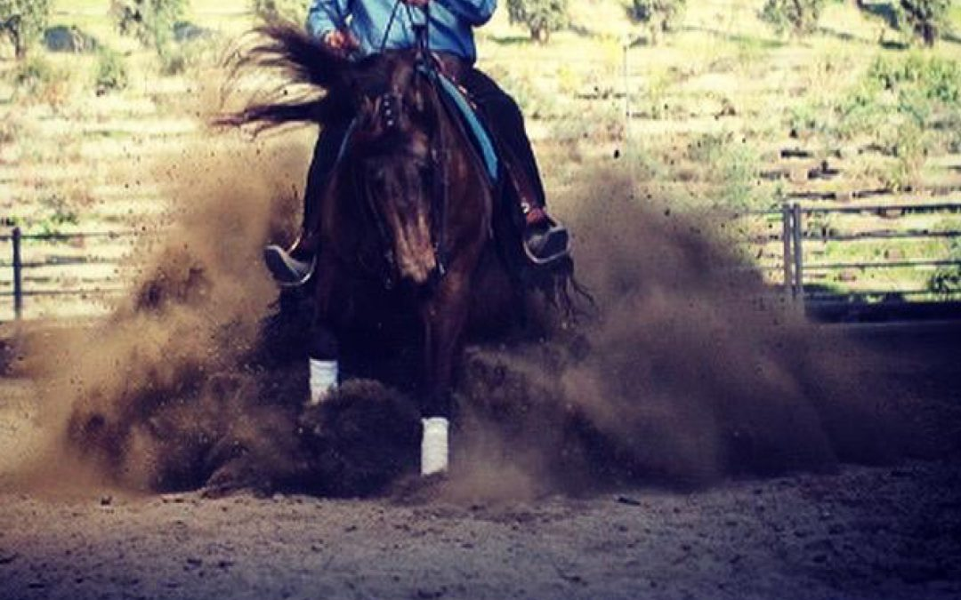 2014 AQHA Gelding by Rooster Nic