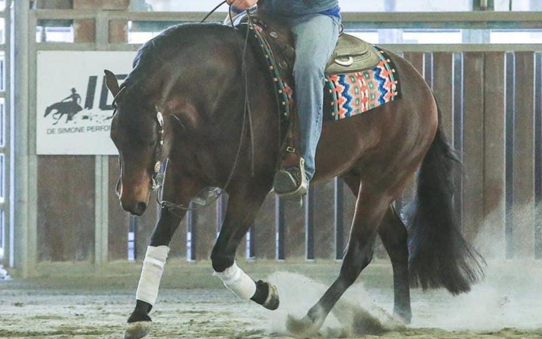 New In! Beautiful 4yo Stallion by Rowdy Yankee