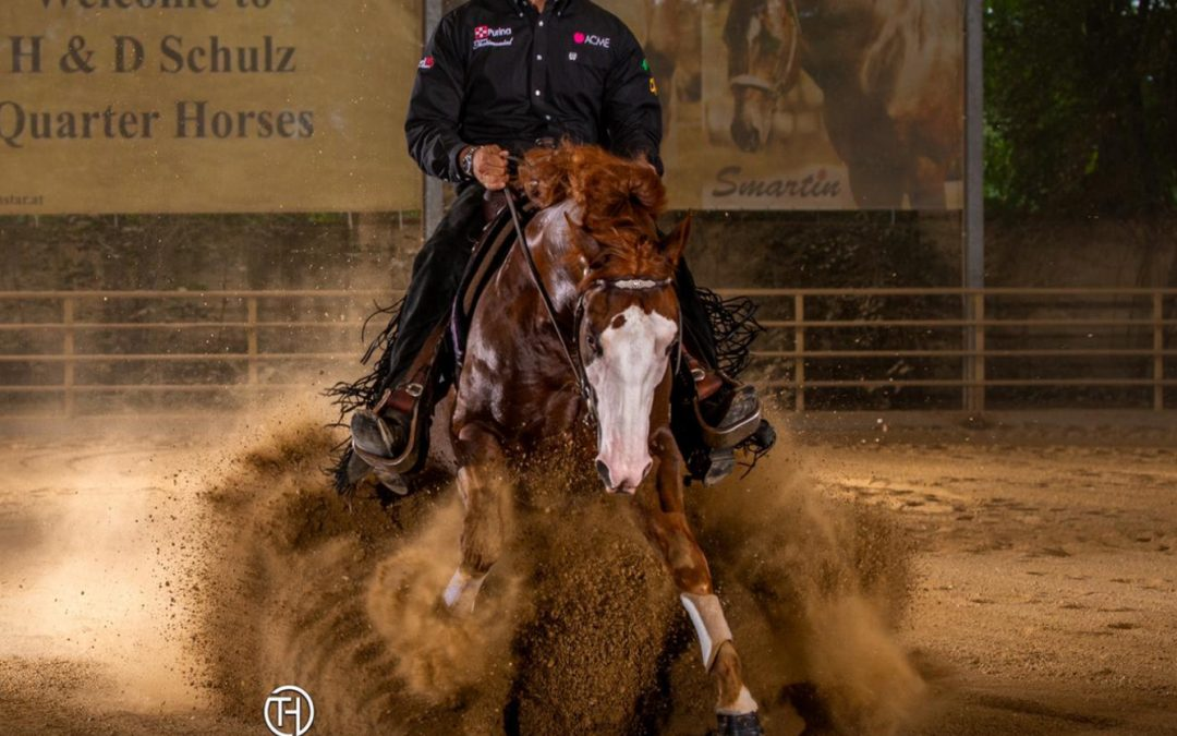 A new home for 2016 AQHA Gelding PL Magnum ChicChex