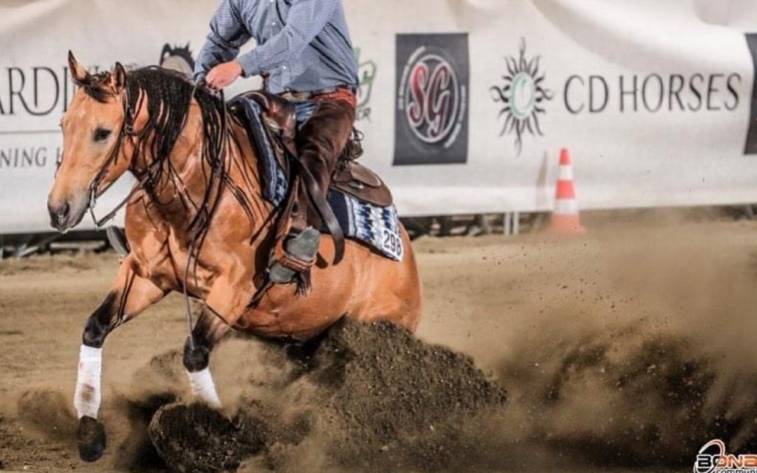 New Records for 2016 AQHA Gelding by Magnum ChicDream